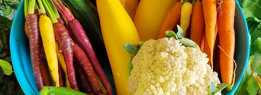 remolacha zanahorias coliflor